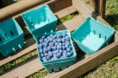 Blueberry picking in container