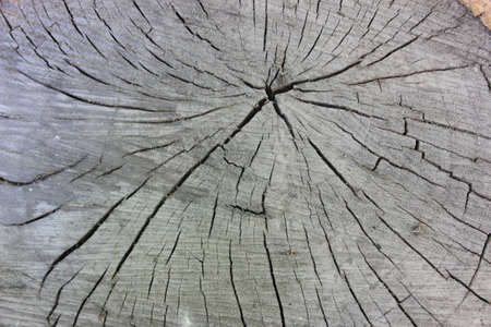 Background Old Wood