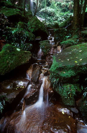 A small waterfall in a rain forest photo