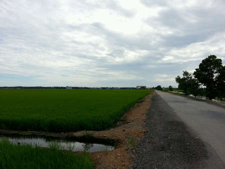 beside: Tarred road beside paddy field