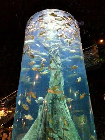aquaria: Fishes swimming in a huge aquarium