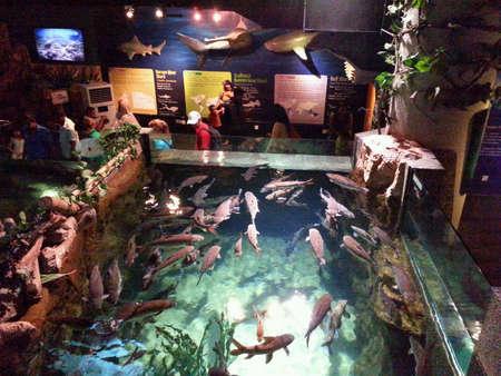 aquaria: Aquaria KLCC Kuala Lumpur