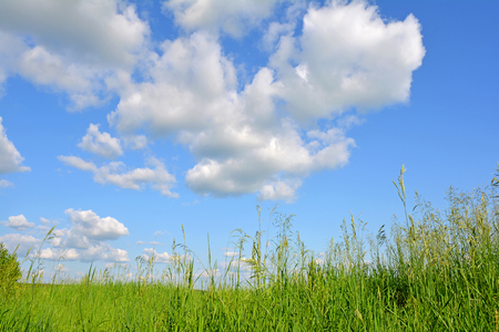 Summer landscape. Blue sky with white clouds above the green glade with grass. Reklamní fotografie