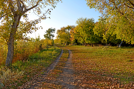 Autumn Park. Yellowed trees. The path among the trees. Reklamní fotografie