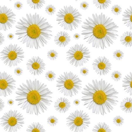 Nahtloses Muster von Gänseblümchen auf weißem Hintergrund