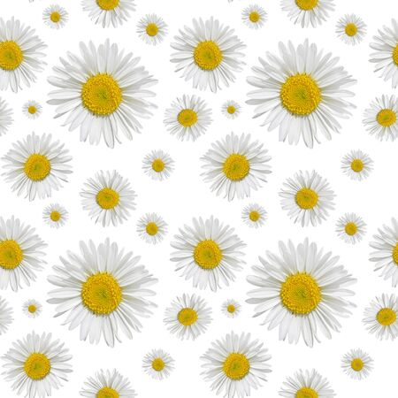 Seamless pattern of daisies on a white background