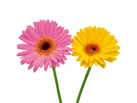 Purple and yellow flowers isolated on a white background