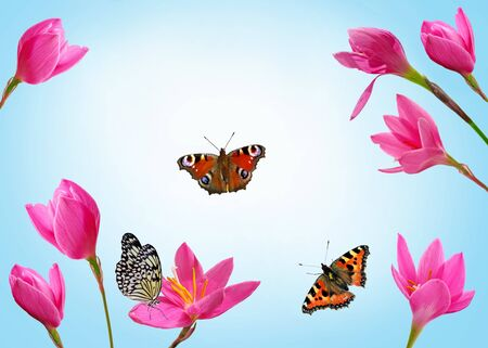 Beautiful picture with pink flowers and butterflies