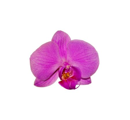 Beautiful purple orchid isolated on a white background Banque d'images