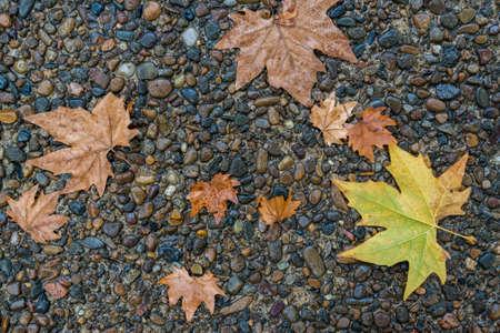 meple leaf on the floor photo