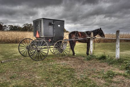 american midwest: Amish Carriage and Horse, Princeton, Wisconsin