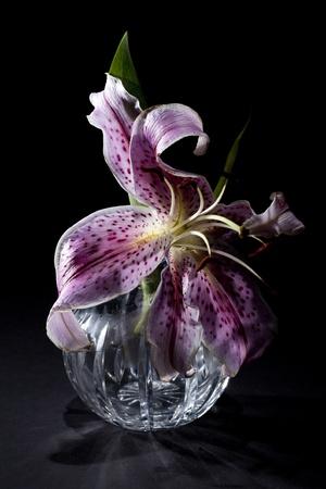 vase: Lily in Vase