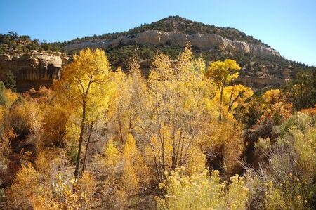 escalante: Fall Colors in Escalante, utah