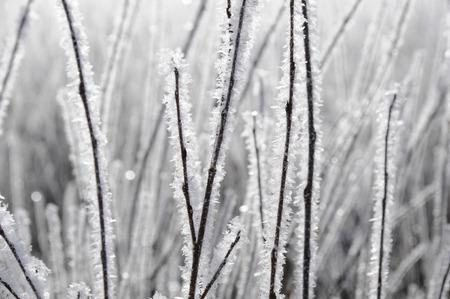 glisten: sparkly2 Stock Photo