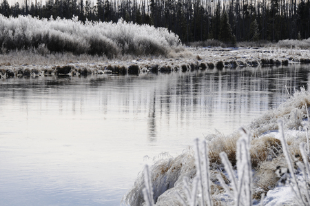 dreary: Frosty grass in early morning on a river bend in northern wyoming