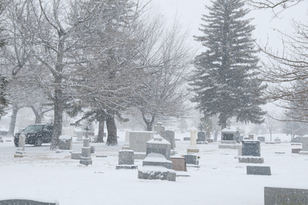 cemetary in snowfall with trees Banco de Imagens