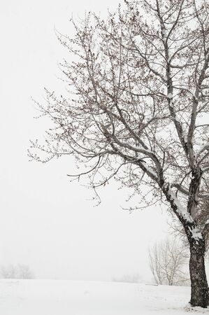 Lone tree quiet place in snow and winter scene