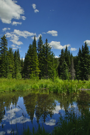 Reflecting pond with trees and deep green grass flowers and cattails