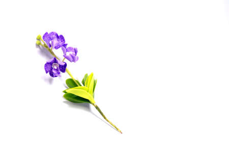 adorning: flower isolated in white Stock Photo