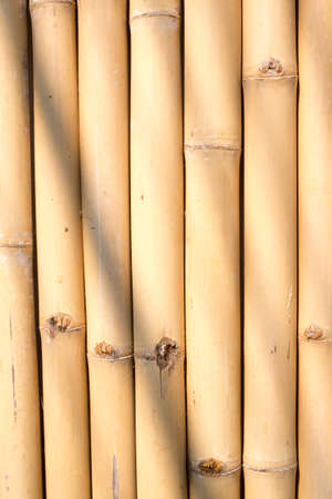 japanese garden: bamboo Stock Photo