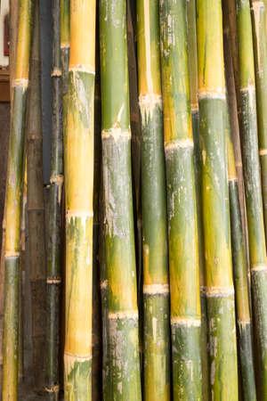 bamboo stick: bamboo Stock Photo