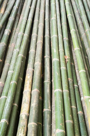 primary product: bamboo Stock Photo