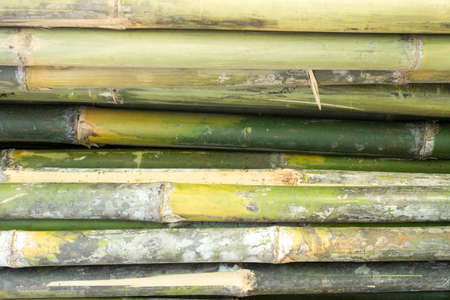 lumbering: bamboo Stock Photo