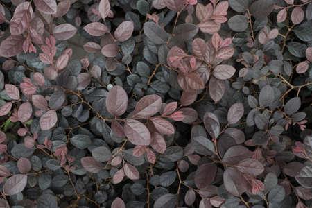 leaf: leaf Stock Photo