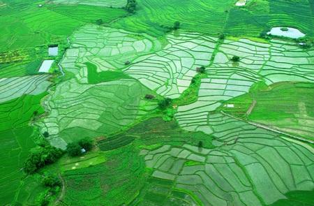plan éloigné: Vue aérienne de la rizière pendant la saison des pluies