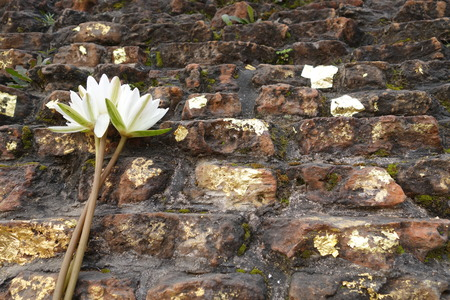 sarnath: Lotus flower offering on the Buddhas cremation stupa, Kushinagar, India Stock Photo