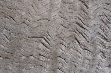 bark texture: Wavy bark texture of a dead wood