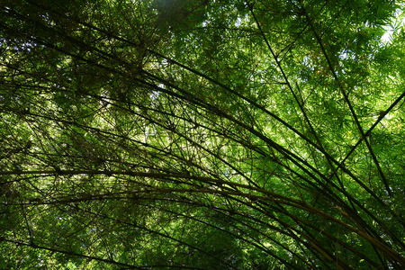 provide: Bamboo trees provide shade from the sun