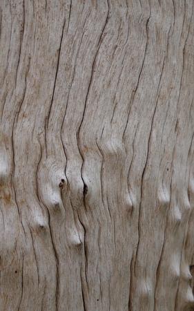 bark texture: Knotty bark texture of a dead wood Stock Photo