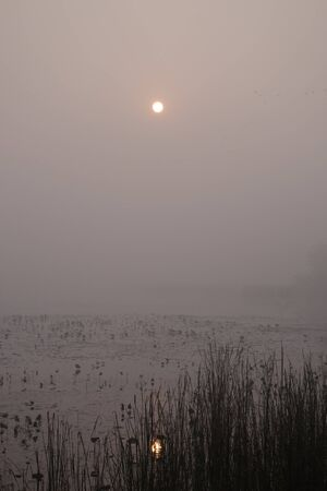 birthplace: Sun reflected off water during a foggy morning in Lumbini, Nepal  the Birthplace of the Lord Buddha