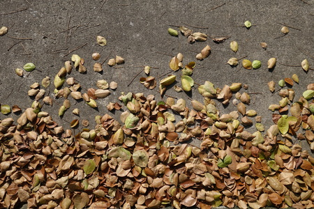 dry leaves: Dry leaves on the ground