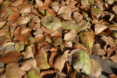 hojas secas: Dry leaves on the ground