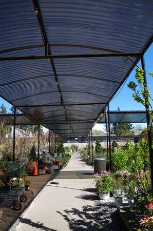 Corrugated roof covering a nursery pathway Reklamní fotografie