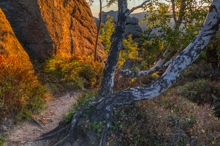 Orange morning light on boulders, rock formation and birch trees, saturated background Banco de Imagens