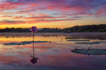 relict: I just wish the summer would never end. Sunset on the lotus pond. Khabarovsk region, far East, Russia.