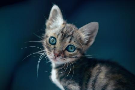 descendants: Kitten