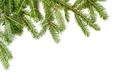 wooden insert: Fresh green fir branches isolated on white background Stock Photo