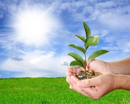 tree growing: Financial concept