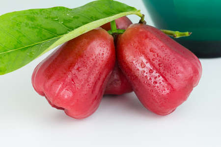 Rose apple or Chomphu tropical fruit on white background