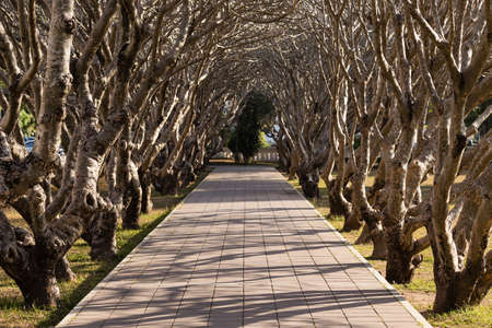 Pathway and Tree Tunnel in The Park Stock Photo