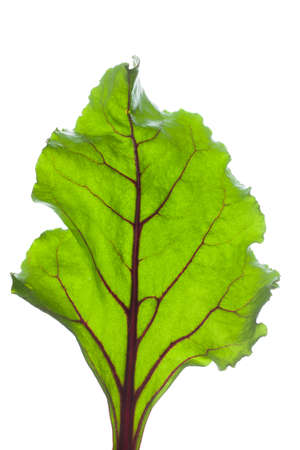 Beetroot leave on white background photo