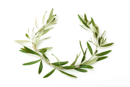 オリーブの花輪としても知られている kotinos だった古代オリンピック大会の勝者のための賞