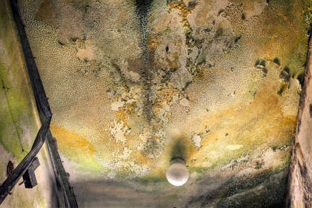 ceiling texture: Mold growth and water stains on the ceiling of an abandoned house  Stock Photo