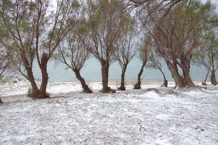 whiteness: Landscape with snow on green herbs and some trees next to the sea