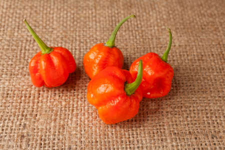Trinidad Moruga Scorpion Spicy chili in the world on a brown background photo