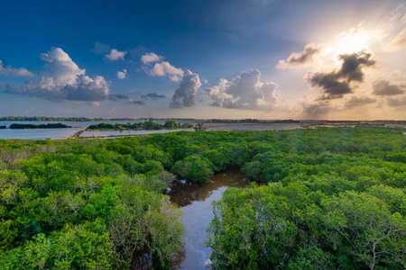 Ru Cha rare and precious mangrove forest is located in Huong Phong commune, Huong Tra district, Thua Thien Hue province, Vietnam. Stock fotó